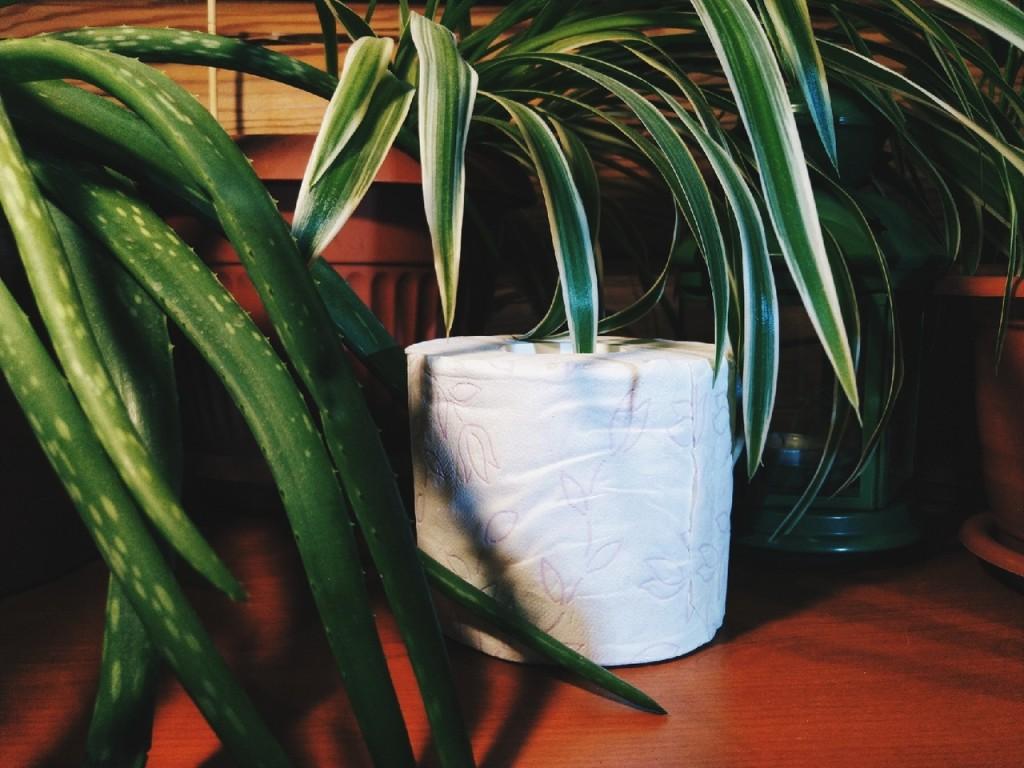 b Бумажка  сэр   b  Топ 7 рулонов туалетной бумаги зева-аква-туб