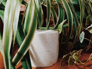 b Бумажка  сэр   b  Топ 7 рулонов туалетной бумаги софион