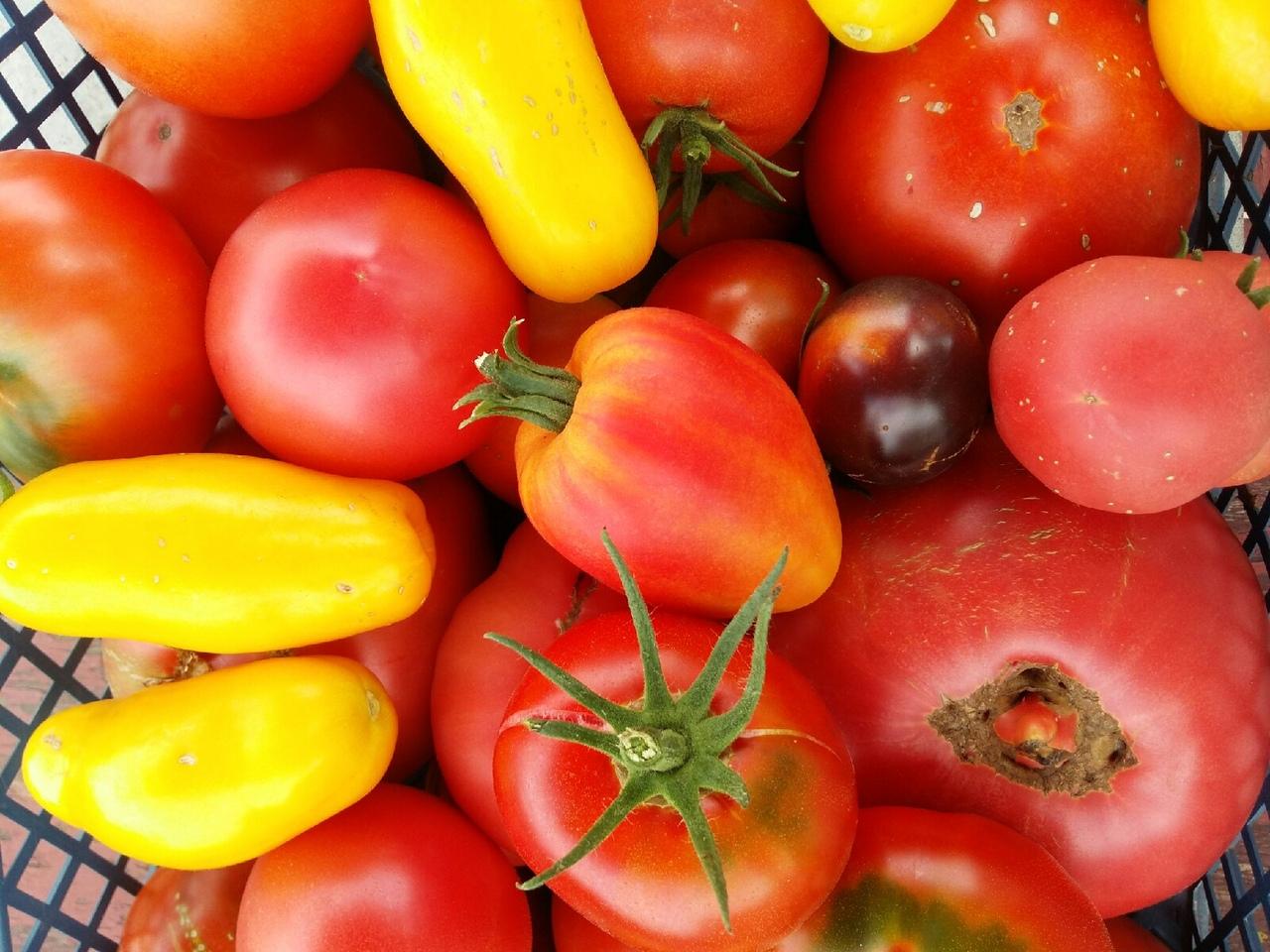 Огородный карантин  как вырастить съедобный урожай на балконе и участке  2