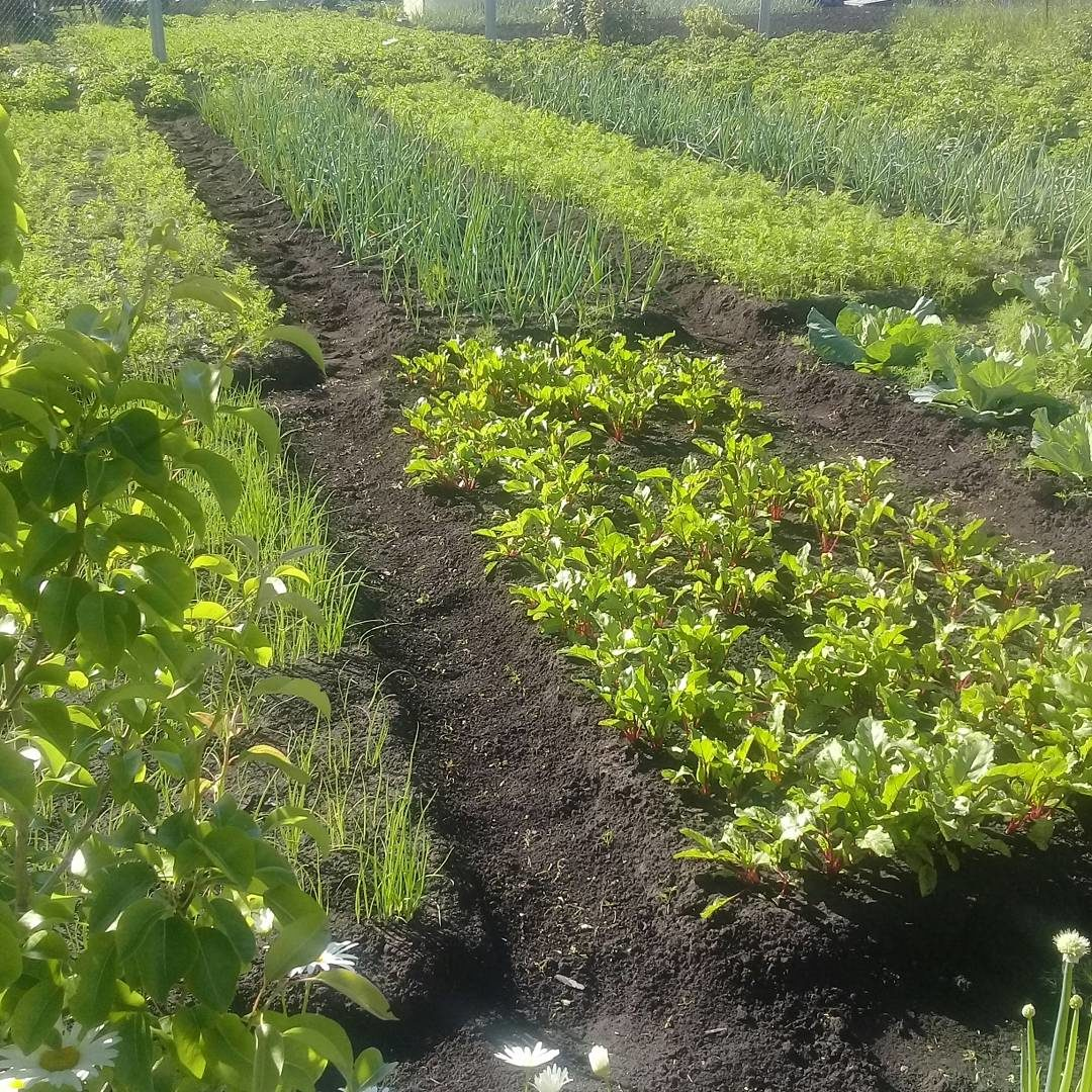 Огородный карантин  как вырастить съедобный урожай на балконе и участке  8