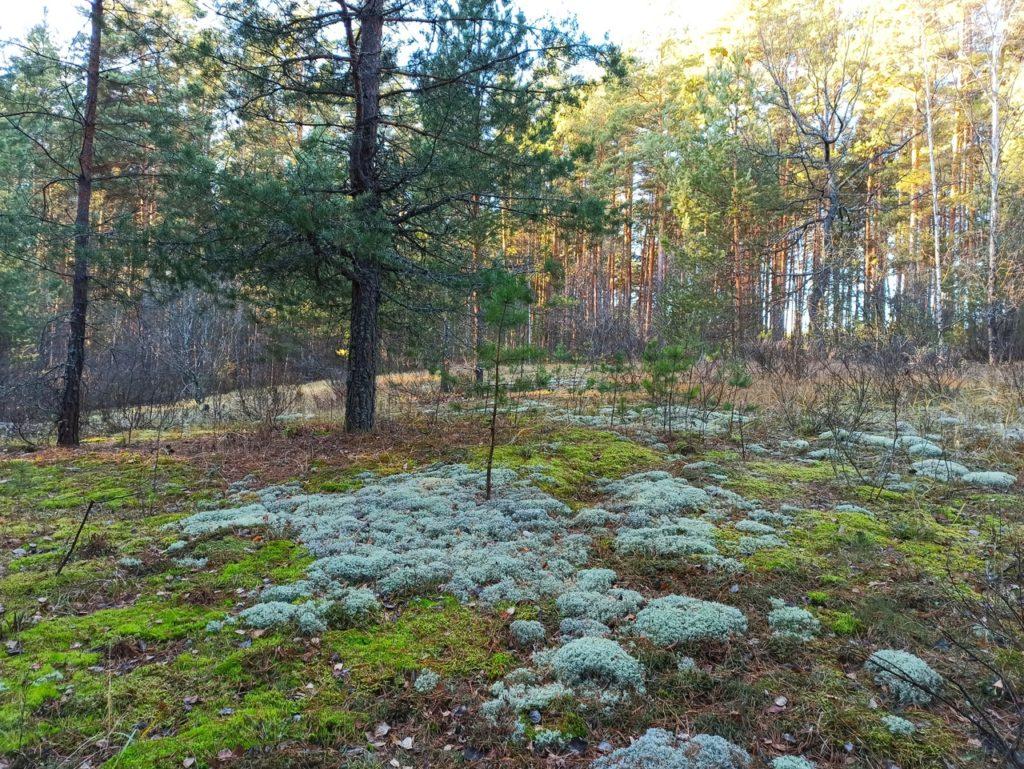 b Топ 6 мест  b  в Мордовии  куда можно отправиться за грибами Сабаево