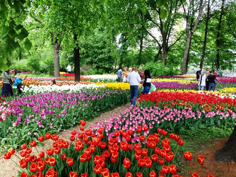 Рок концерты  выставки и заброшенный санаторий  гид по городам  куда можно слетать на майские праздники прямиком из Саранска