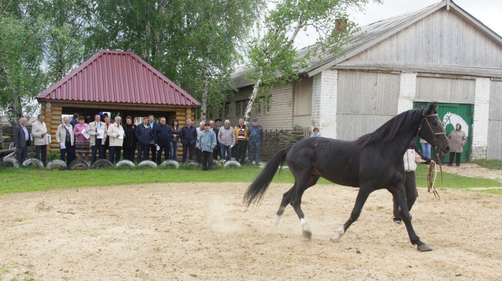 b Покататься в Саранске   b  на лошадях  моноколесах и электрокарах