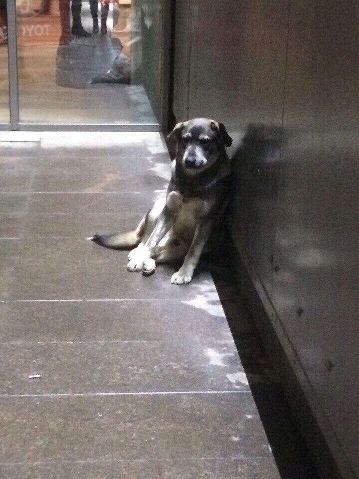 b Быть или не быть  b  в Саранске   приюту для бездомных животных    VG5O_XvlAWE
