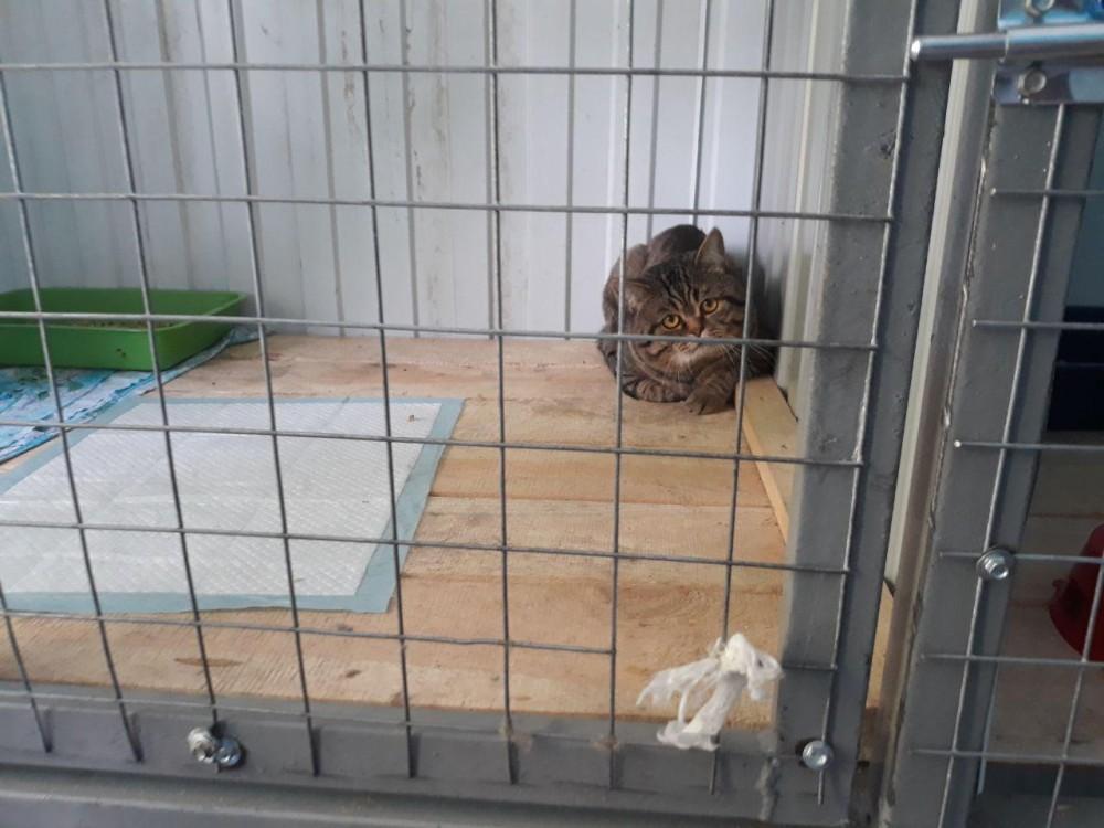 В отличие от собак, которых, редко, но выпускают на улицу, кошкам проходится целыми днями томиться в тесных клетках.
