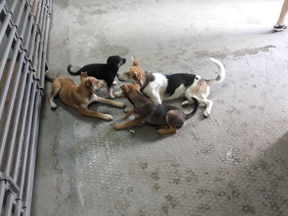 Рук волонтеров не хватает на полноценную уборку помещения, поэтому иногда собаки играют в собственном дерьме.
