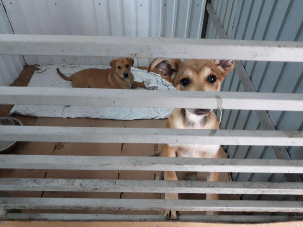 Увы, но приют не стал местом спасения бродячих животных. У многих из них было бы куда больше шансов выжить на улице.