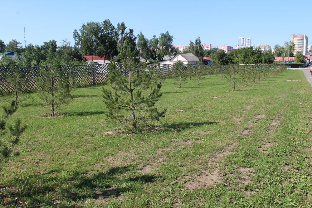 b Город  не болей   2   b  как озеленить   центр Саранска    Саженцы