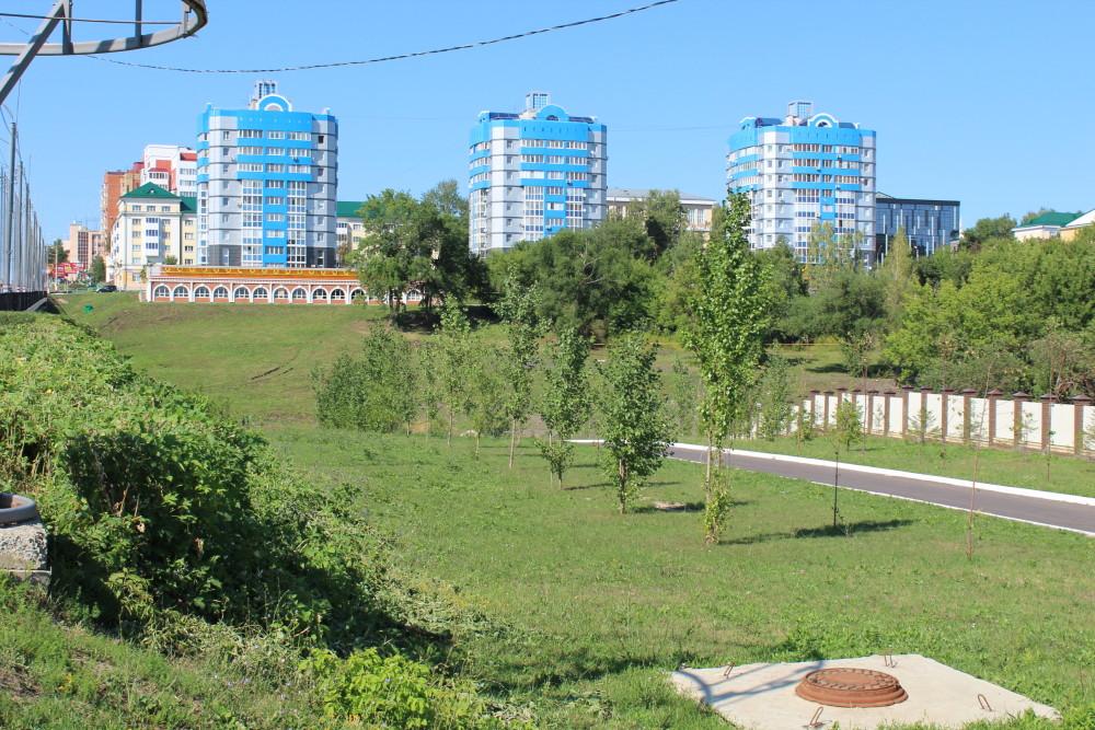 b Город  не болей   2   b  как озеленить   центр Саранска    Саженцы 1