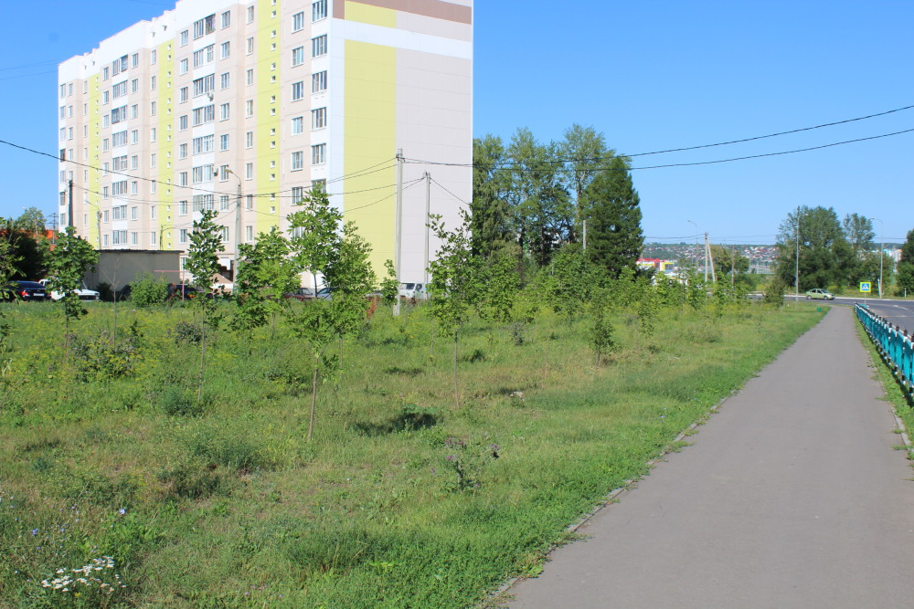 b Город  не болей   2   b  как озеленить   центр Саранска    Саженцы 2