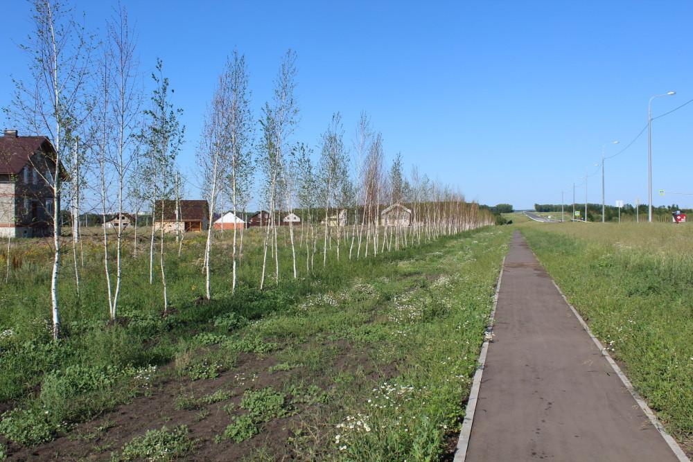 b Город  не болей   2   b  как озеленить   центр Саранска    Молодые березки