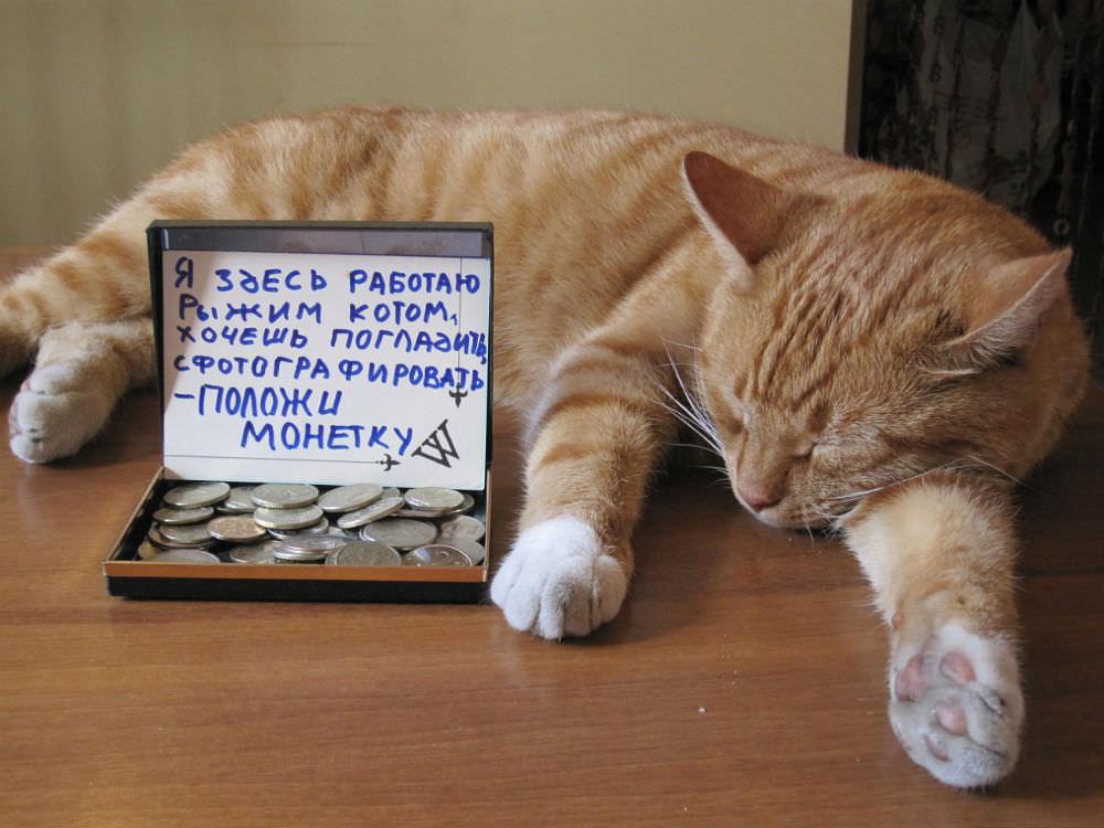b Топ 15  b  запросов про nbsp Саранск в nbsp Яндексе poiskovik_6