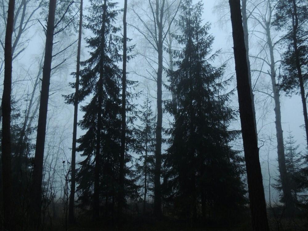 sivinskie_lesa_1