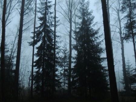 sivinskie_lesa_1_1