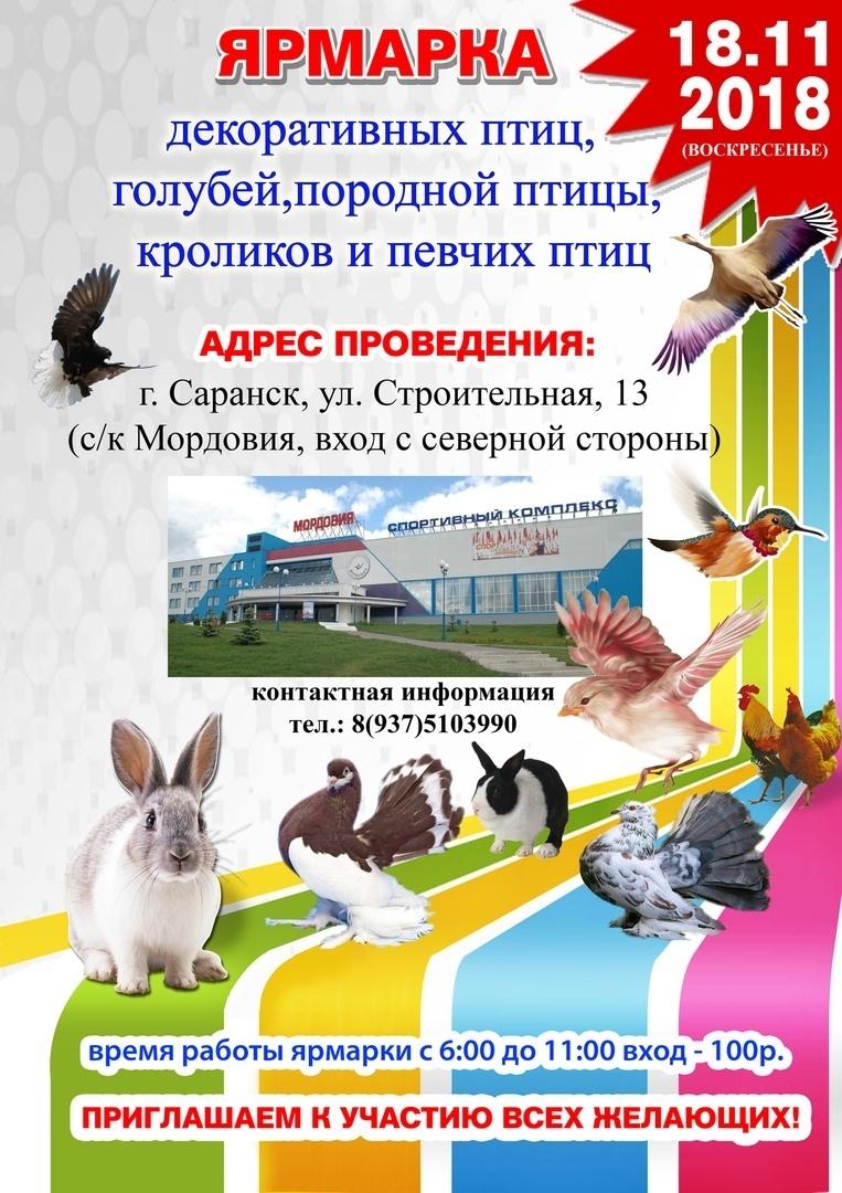 afisha_zverushki