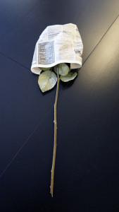 Розы для любимых  инспектируем цветочные магазины Саранска edelveis (2)