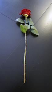 Розы для любимых  инспектируем цветочные магазины Саранска edelveis (3)