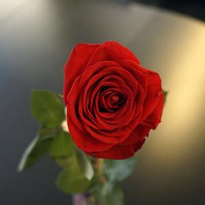 Розы для любимых  инспектируем цветочные магазины Саранска ekvador (1)