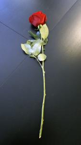 Розы для любимых  инспектируем цветочные магазины Саранска ekvador (3)