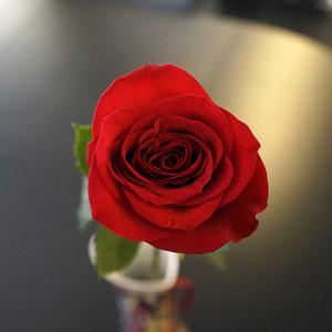 Розы для любимых  инспектируем цветочные магазины Саранска flower_box (1)