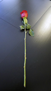 Розы для любимых  инспектируем цветочные магазины Саранска flower_box (3)