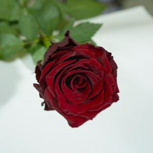 Розы для любимых  инспектируем цветочные магазины Саранска pt (2)