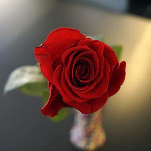 Розы для любимых  инспектируем цветочные магазины Саранска tsvetochnyi_ryad (1)