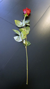 Розы для любимых  инспектируем цветочные магазины Саранска tsvetochnyi_ryad (3)