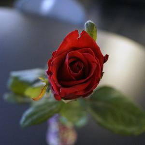 Розы для любимых  инспектируем цветочные магазины Саранска vremeva_goda (1)